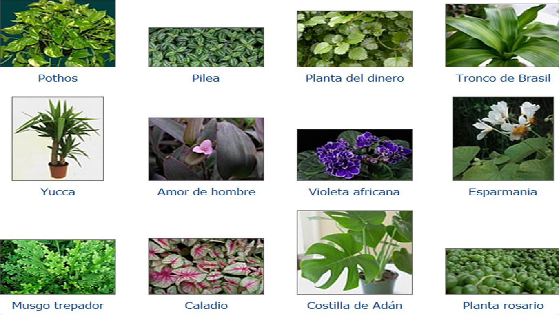 Las plantas como una herramienta que eleva el valor de su Nombres de plantas comunes